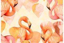 Flamingos ❤