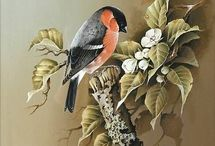 Картинки птицы