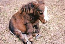 pony horses