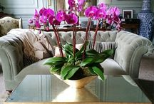Orchid Designs by Orly khon