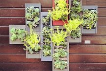 Backyard Goods / Green thumb / by Stephanie Borge