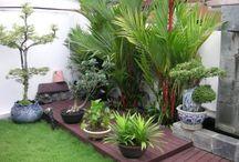 Natureza em casa