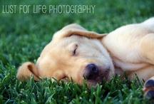 My Photography / Some of my favorite photos I've taken. (www.lustforlifephoto.com)