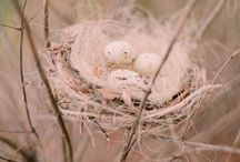 Nests / by Willow B Primitives