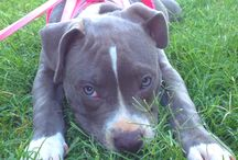 Blue pits / by Chrissie Long