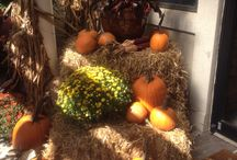 Let the Fall Festivities Begin with Sunshine Nursery! / Let the Fall Festivities Begin with Sunshine Nursery! All you need for your Autumn Decor. Mums, Pumpkins, Corn Stalks and Wheat Straw, & much more!