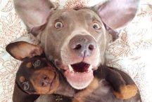 I  DOG  / Per chi adora i cani ♥