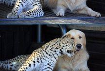 animals ❤
