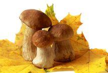 houby.