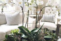 Room plants