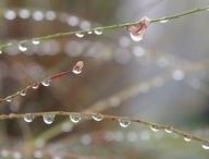 Teardrops of heaven