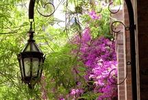 LUMINARIAS CALLEJERAS / Por las callecitas de los barrios encuentro una bella luz que ilumina mi camino.