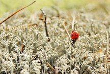 Macro Beetles /  Macro photos of beetles and ladybirds - young and so beautiful