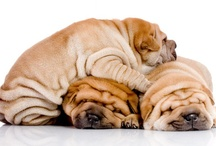 I Love Dogs!! / by Emma Farley