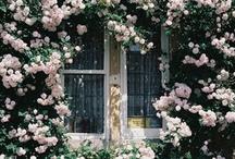 Home and Garden / by Rashda Masri