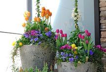 Macetas/flores