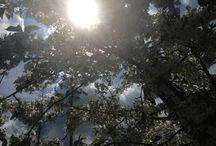 seasons / Spring