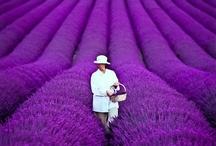 Purple / Purple color