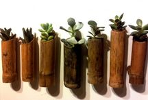 canna bamboo