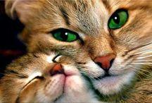 Sweet kitty little kitty