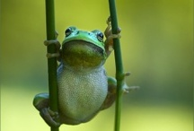 Frogs Are Adorable