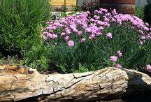 My garden ! / My garden is my house... NewMouseVillage :) !