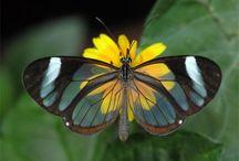 Motýli a brouci