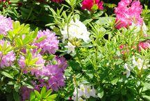 Szépséges virágok