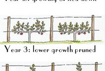 Fruit Trees Info / by Cathy Kantowski