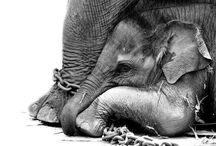 Annetaan eläinten elää rauhassa luonnonomaisessa ympäristössään / On eläimiä, jotka tarvitsevat nykypäivänä eläinsuojelua esimerkiksi sukupuuttoa vastaan mutta on myös eläimiä, joita hyödynnetään vastuuttomasti ihmisten viihdyttämiseen tai muuhun tarkoitukseen. Annetaan eläinten elää rauhassa luonnonomaisessa ympäristössään.
