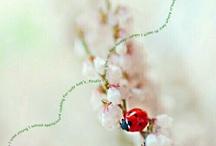 Ladybug thinking