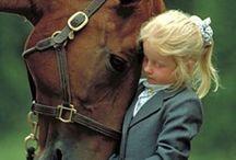 Horses / by Karin Bradshaw