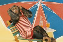 Tapety - zwierzęta - małpy
