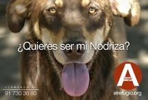 #quierosernodriza