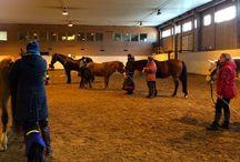 Hästigt / fördjupande artiklar och reportage för hästars välmående och ryttarkänsla