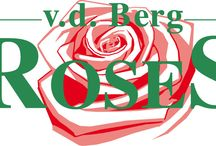 G-Fresh grower v.d. Berg Roses / Grower of Rosa Candy Avalanche, Peach Avalanche and Emerald Avalanche