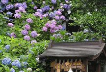 Dream Gardens / Beautiful gardens / by Jessica Jackson
