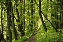 Lesné  cestičky