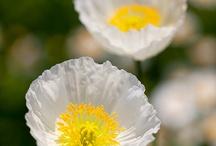 zdjęcia kwiaty