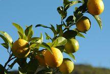 healty / tip kesehatan  : dengan minum  air jrk lemon hamgat tiap pagi membuat badan lebih fit.