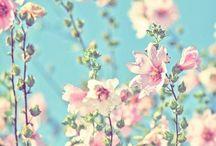 Garden / by Liene V