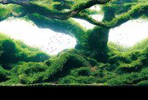 Akvárium / Třeba na něj jednou bude i místo