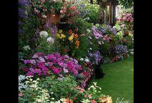 Garden / Siesta