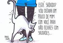 frases gato
