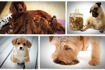 Dog food secrets book review