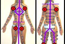 Lymphatický systém