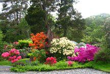 Around the Garden / Shrubs and flowers in bloom around our garden