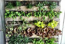 mur végétal où jardin suspendu
