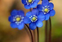Акварель и цветы