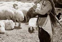 pásztor